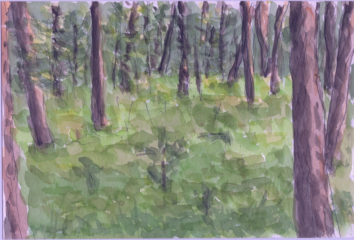 A watercolour of pines trees in forest.