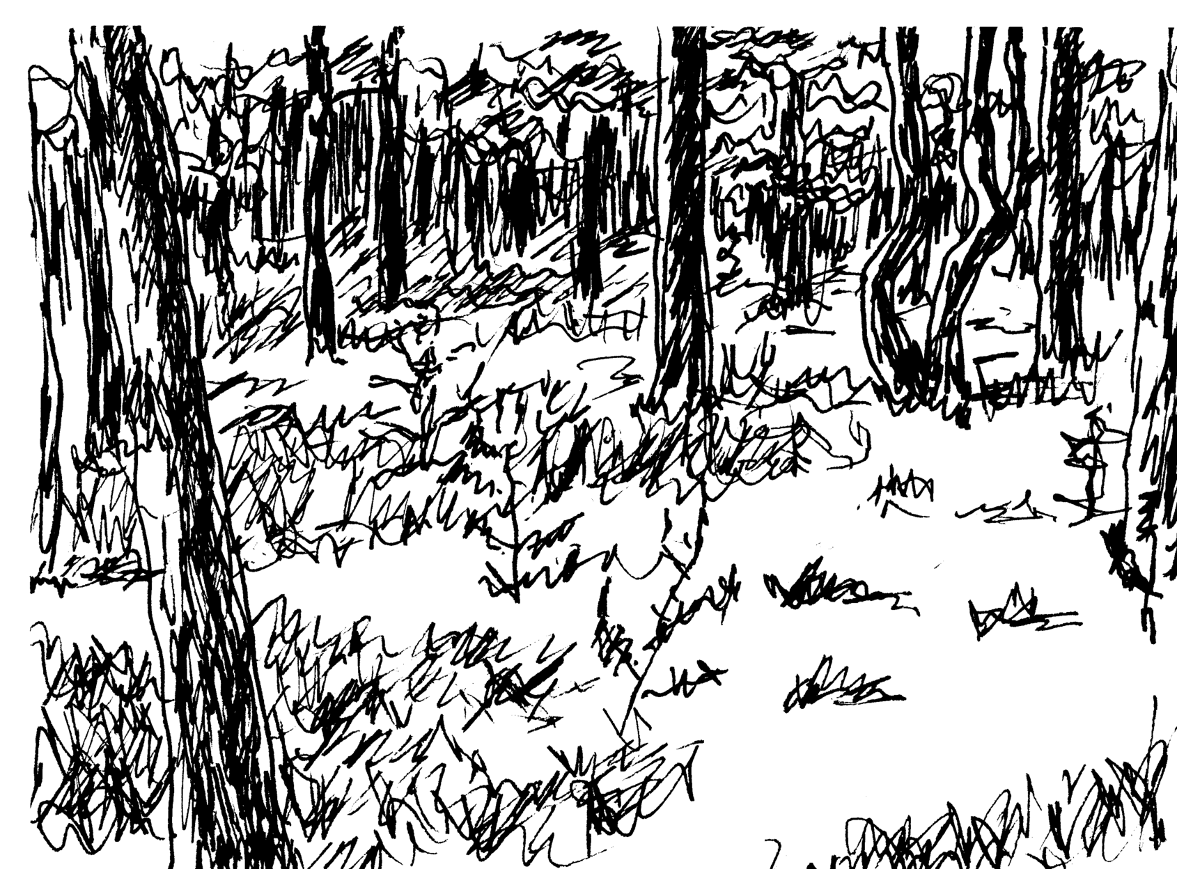 An ink drawing of pines trees in forest.